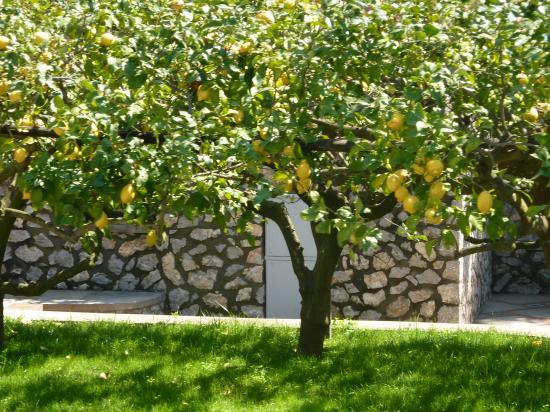 Capri Limone